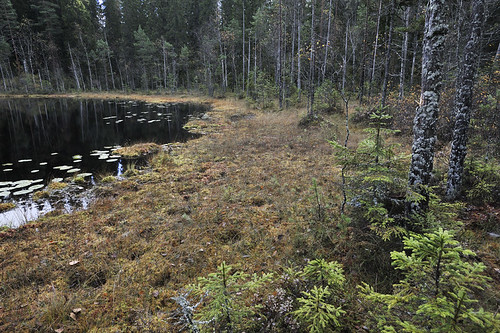 Punkaniemi, UPM:n hakkuusuunnitelma. High conservation value forest planned to be clearcut by UPM