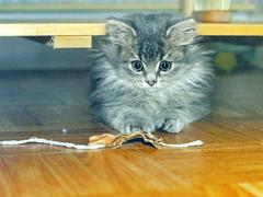 00374 (d_fust) Tags: cat kitten gato katze 猫 macska gatto fust kedi 貓 anak katt gatito kissa kätzchen gattino kucing 小貓 고양이 katje кот γάτα γατάκι แมว yavrusu 仔猫 का बिल्ली बच्चा