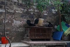 Ty H District, H Ni (silkylemur) Tags: asia southeastasia vietnam fullframe hanoi canoneos asean indochina 6d vitnam  2015  wietnam vitnam  hni   canonef24105mmf4lisusm  efmount     vietnamas hanoihanoi canon6d      cnghaxhichnghavitnam  ngnam canoneos6d      azjapoudniowowschodnia   vijetnam  mainlandsoutheastasia      ef ef eos6d ef ef  eos6d hnuis      maritimesoutheastasia