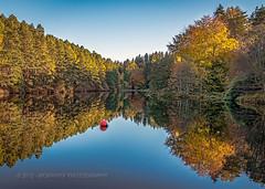 Autumn gold... (moraypix) Tags: autumn autumncolours elgin landscapereflections autumngold mirrorreflections autumnreflections millbuiescountrypark moraypix moraypixphotography nikond750 nikon2485lens