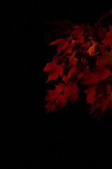 Fall Night (JonathanSteelePhotography) Tags: red orange color fall nature yellow night canon outside outdoors leaf fallcolors chattanoogaphotographer fallnight canon7d fall2015 nashvillephotograher