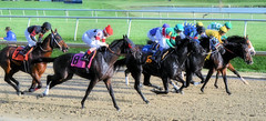 "2015-11-11 (86) r7 and they're clear of the gate (JLeeFleenor) Tags: photos photography md marylandracing marylandhorseracing laurelpark jockey جُوكِي ""赛马骑师"" jinete ""競馬騎手"" dżokej jocheu คนขี่ม้าแข่ง jóquei žokej kilparatsastaja rennreiter fantino ""경마 기수"" жокей jokey người horses thoroughbreds equine equestrian cheval cavalo cavallo cavall caballo pferd paard perd hevonen hest hestur cal kon konj beygir capall ceffyl cuddy yarraman faras alogo soos kuda uma pfeerd koin حصان кон 马 häst άλογο סוס घोड़ा 馬 koń лошадь outside outdoors maryland"