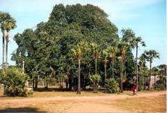 198112.239.indien.pondicherry (sunmaya1) Tags: india puducherry