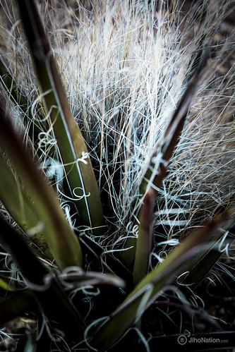 JihoNation-jiho-sohn-baltimore-photography-0003-IMG_8512 petrified-forest-arizona-national-park