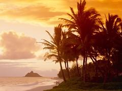 Sunset Palms Hawaii Wallpaper (hypesol) Tags: beachwallpaper skywallpaper hdwallpaper sunsetwallpaper islandwallpaper hawaiiwallpaper treeswallpaper seawallpaper cloudswallpaper palmstreeswallpaper
