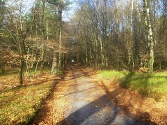 Imbos / Imbosch (Nelis Zevensloot) Tags: autumn automne nationalpark herbst herfst heath veluwezoom heide rosedale natuurmonumenten rosendael rheden velp rozendaal bruyre rozendaalseveld worthrheden rhederheide imbos nationaalparkdeveluwezoom