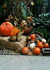 popcorn-all-ready-for-the-howl-o-ween-parade-shes-one-of-princess-and-chewys-little-girls-_4053793689_o