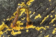 yellow (panoround hutter) Tags: smrgsbord