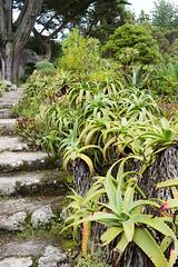 Abbey Gardens, Tresco (Kevin James Bezant) Tags: islesofscilly ios abbeygardens tresco