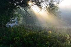 Morning light on mist (tmo222) Tags: morning light rays mist ravine nature toronto