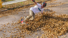 Fall problems 5 (Codydownhill) Tags: skateboard skateboarding longboard longboarding fall leaves skating street downhill south dakota autumnleaves