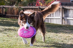 Why make do with one Frisbee when you have two?