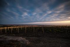 . (Vratislav Indra Art and Photography) Tags: vratislavindra photography southmoravia czechrepublic vineyard landscape autumn