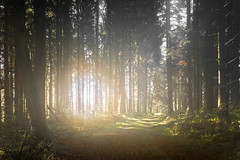 The White Hole - Olympus PEN-F (Andreas Voegele) Tags: olympus olympuspenf penf pen andreasvoegelephoto sun light color forest trees autumn search whitehole wald licht landscape sigma ngc