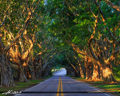 Bridge Road Under the Trees Hobe Sound Florida (Captain Kimo) Tags: aurorahdr2017 bridgeroad captainkimo easyhdr florida hdrphotography hobesound jupiterisland martincounty treecoveredroad