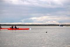 Remise en milieu naturel jeunes phoques (Mariie76) Tags: animaux phoque phoca vitulina veau marin jeune petit bébé relâché remise en milieu naturel picardie nature baie de somme 80 mignon extérieuranimaux extérieur animal le crotoy kanoé kayak bateau pêche pêcheurs mer