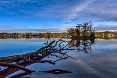 Kleinstinsel (novofotoo) Tags: baum bume herbst himmel insel landschaft natur reflexion see seehamersee totholz wasser wolken autumn clouds landscape mirror nature scenic sky tree trees water