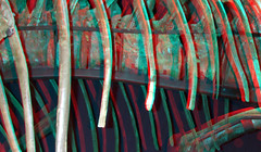 Ribs Tyrannosaurus 3D (wim hoppenbrouwers) Tags: ribs tyrannosaurus 3d anaglyph stereo redcyan naturalis leiden trex trix