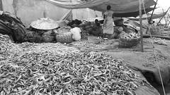 Vizag-Fishing-harbour 21 (anindya0909) Tags: vizag vishakhapattnam