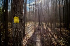 follow this this 3 (jfl1066) Tags: autumn2016 canoneosm3 nj newjersey canon eosm3 davidsonsmill davidsonsmillpondpark middlesexcounty