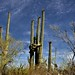 The Lovers (Saguaro National Park)