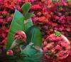 Froggie Went A Courtin' (bethrosengard) Tags: bethrosengard photomanipulation digitallyenhanced photoart digitalmagic digitalart