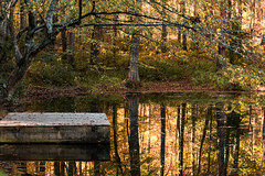 Secrets of the forest (Irina1010) Tags: forest woodland pond reflections foliage light golden mirror platform trees beautiful peaceful nature autumn canon ngc