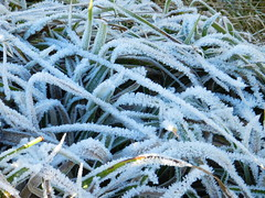 Frosty Details, Haugh of Glass, Aberdeenshire, Nov 2016, Explored (allanmaciver) Tags: frosty detials aberdeenshire scotland glass remote lonely white still quiet allanmaciver macro