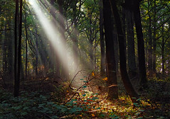 Ein magischer Augenblick - A magical moment (cammino5) Tags: 2016 september forest sunbeams sunrays autumn