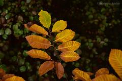 Otoo (juanmerkader) Tags: andaluca andalusia autumn espaa europe mediterraneo naturaleza nikond750 otoo photodetalle photovida picture spain nature nikon pic picofftheday picoftheday