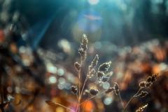 feeling colourful (Morag.) Tags: grass bokeh colour color sunray nature november nikon d3300 nikkor digital dof