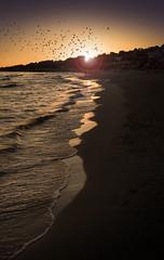 Golden shores. f9 1/125s; ISO 100: FL:35mm  Juan Manuel Saenz de Santa Mara, 2016 (Brenus) Tags: impresiones lensblr photographers tumblr landscape seascape sunset atardeceres mediterranean beaches