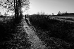 Sunset (Tenho Mikkolainen Personal) Tags: helsinki finland fujifilm fujifilmx xpro2 dog dogs dogslife haltiala bullterrier englishbullterrier ebt bully