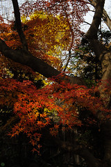 20161204-DS7_6522.jpg (d3_plus) Tags:  a05 wideangle d700 thesedays  architecturalstructure   kanagawapref   sky park autumnfoliage  japan   autumn superwideangle dailyphoto nikon tamronspaf1735mmf284dild  street daily  architectural  fall tamronspaf1735mmf284dildaspherical touring streetphoto  nikond700 tamronspaf1735mmf284 scenery building nature   tamron1735   tamronspaf1735mmf284dildasphericalif   autumnleaves