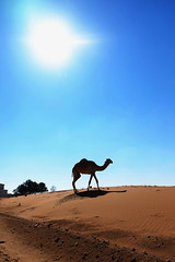 Al Ain (mhbous) Tags: winter photography sand friend dubai fuji desert farm dune uae bbq camel fujifilm alain ain فوجي جمال العين الامارات صحراء xe1 كثبان