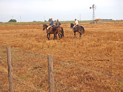 Butteri (Roybatty63) Tags: horses cowboy campagna campo cavalli maremma campi alberese butteri