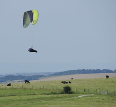 Paragliding (grahambrown1965) Tags: sports sport sussex cow flying cows pentax devils flight sigma paragliding gliding dyke devilsdyke fulking fulkinghill 150500mm pentaxk3ii k3ii