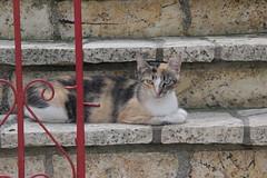Find en kat (Benny Hnersen) Tags: holiday cat kat stair treppe greece katze griechenland ferie sivota trappe syvota 2015 augsut grkenland