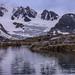 挪威北極熊_1d3_20150725-71.jpg