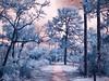CRW_0056 (LValdes) Tags: landscape florida canong3 irconverted lvaldes