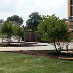 Trees at Linc/Wash