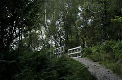 Been away for a while... (Zander Campbell) Tags: bridge trees nature forest woodland walking scotland highlands woods memorial hiking path walk scottish peaceful hike trail greenery pathway fortwilliam commando lochaber speanbridge westhighlands greatglen highbridgepath