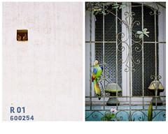 (El grito lquido) Tags: bird film animals fauna 35mm lima panasonic fujifilm analogue districts symbolic simbolismo analgico fujicolor losolivos lince dyptic deriva leeway dptico limography chincoa limografas