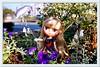 Melanie with a dolphin balloon🎵 (cute-little-dolls) Tags: flowers autumn cute toy miniature doll dolphin balloon kawaii takara cwd littlegarden middieblythe melanieubiquegirl