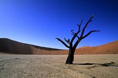 Dead tree, Namibia © Namibia Tourism