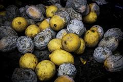 I never have liked Lemons (tootdood) Tags: street art manchester lemons rotten sour mouldy tibstreet canon70d