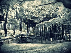 2015-11-16_01-56-54 (fil_____) Tags: autumn blackandwhite panorama nature forest landscape outdoor ngc greece thessaloniki bnw timeless makedonia        macedoniagreece