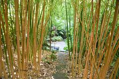 Bamboo Path (EJ Images) Tags: uk england slr garden suffolk nikon nef path bamboo d750 dslr pathway eastanglia 2015 nikonslr exoticgarden nikondslr henstead 24120mmlens hensteadexoticgarden ejimages nikond750 dsc278401