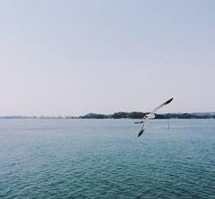 (linhchi_) Tags: blue sea sky nature beautiful japan tokyo peaceful nhtbn p nht