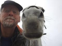 Anisa en Gill (gill4kleuren - 11 ml views) Tags: horse white me beauty fun outside happy riding together marijke gill anisa paard pret hengst arabier